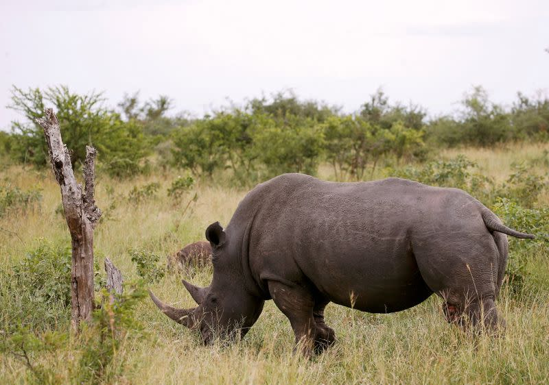 Intelligence helps Namibia turn tide against rhino poachers, government says