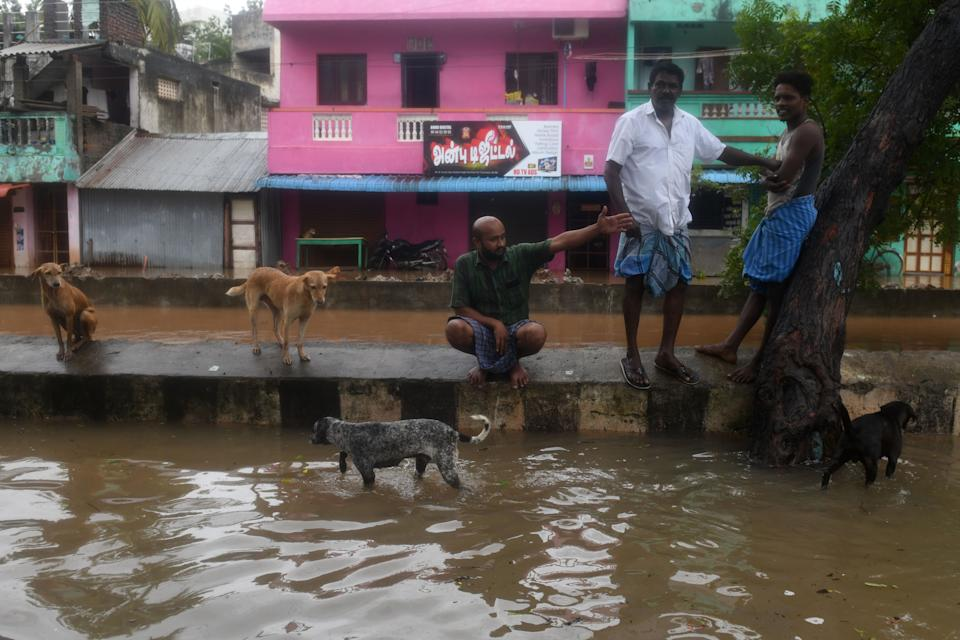 Men stand on a road divider next to dogs along a waterlogged road after heavy rains following Cyclone Nivar landfall, in Puducherry on November 26, 2020. (Photo by ARUN SANKAR/AFP via Getty Images)