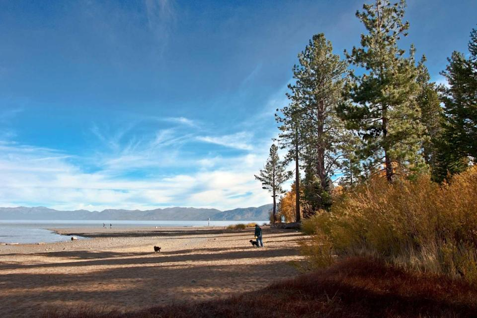 Dogs play near Lake Tahoe's southern Shore.