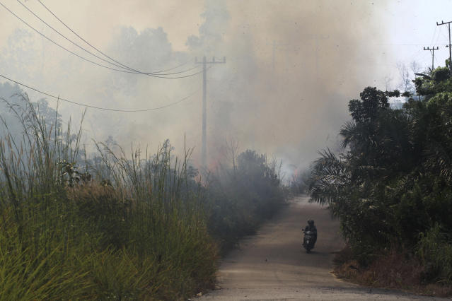 """Motorists ride past forest fire on a peatland forest in Rumbai Pesisir, Riau province, Indonesia, Thursday, June 20, 2013. Smog fueled by forest fire in Indonesia has caused Singapore's main measure for air pollution to surge to an all-time high Thursday afternoon and breached a """"hazardous"""" classification that can aggravate respiratory ailments. Nearby Malaysia closed 200 schools and banned open burning in some areas. (AP Photo/Rony Muharrman)"""