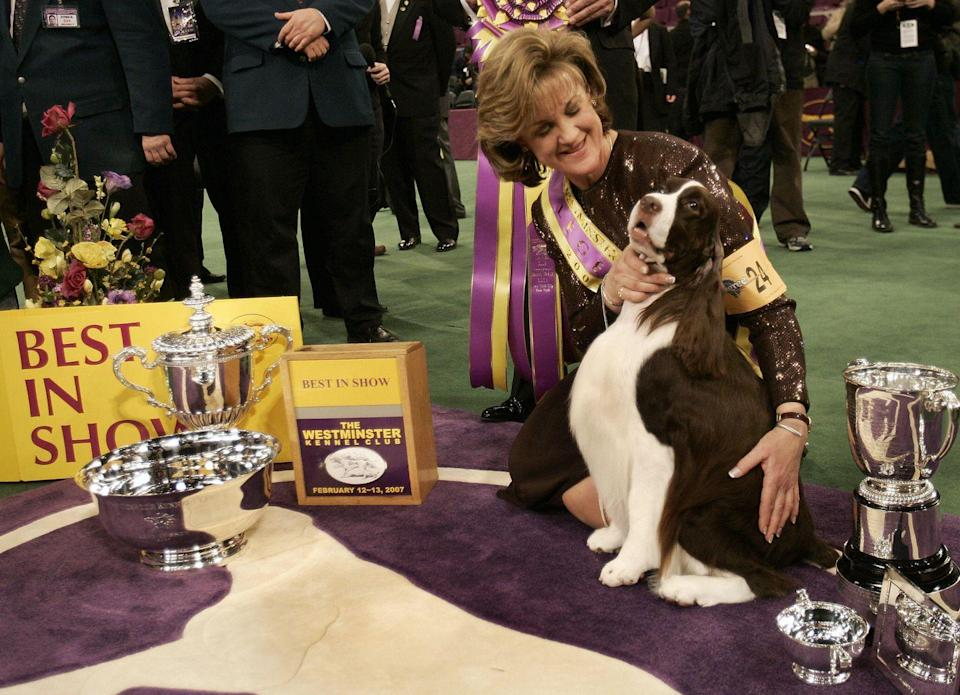 <p>James, an English springer spaniel, is getting some well-deserved love from his owner.</p>