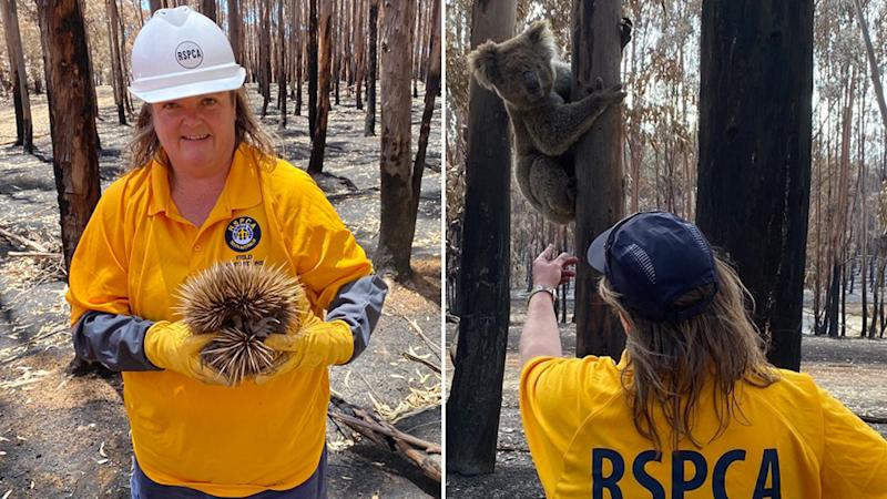 RSPCA South Australia's Chief Inspector, Andrea Lewis decided to detail her experience on Kangaroo Island, as she cares for injured animals following the bushfires. Source: RSPCA South Australia