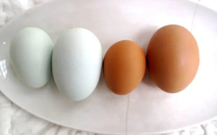 Pullet eggs are half - 2/3rds of the size of regular sized eggs - Waitrose