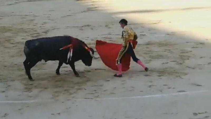 Pic shows: Bullfighter gored by bull. This is the moment a matador is gored by a bull in a Madrid bullring and reportedly sustains two fractures and a 25-centimetre gash.