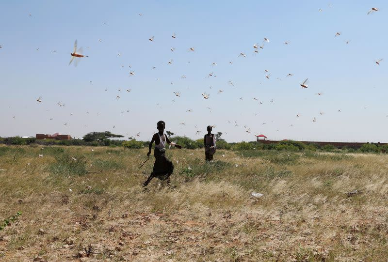 Somali boys attempt to fend off desert locusts as they fly in a grazing land on the outskirt of Dusamareb in Galmudug region