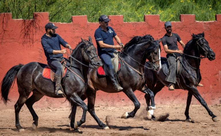 French horse master Joel Proust hopes his stallions will soon return to the movie sets in Morocco, after coronavirus restrictions hit the industry hard