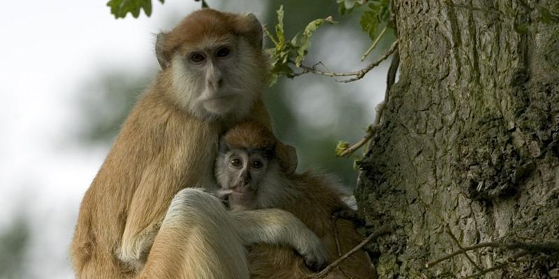 Monkeys killed in United Kingdom safari park blaze