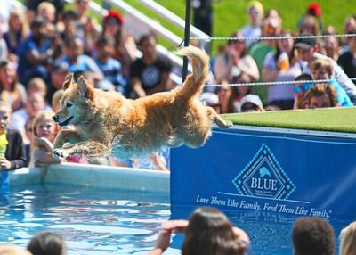 Dog Bowl is a free festival held annually every Memorial Day Weekend at River Place Shops in Michigan's Little Bavaria, featuring more than 25 athletic competitions for dogs like DockDogs.