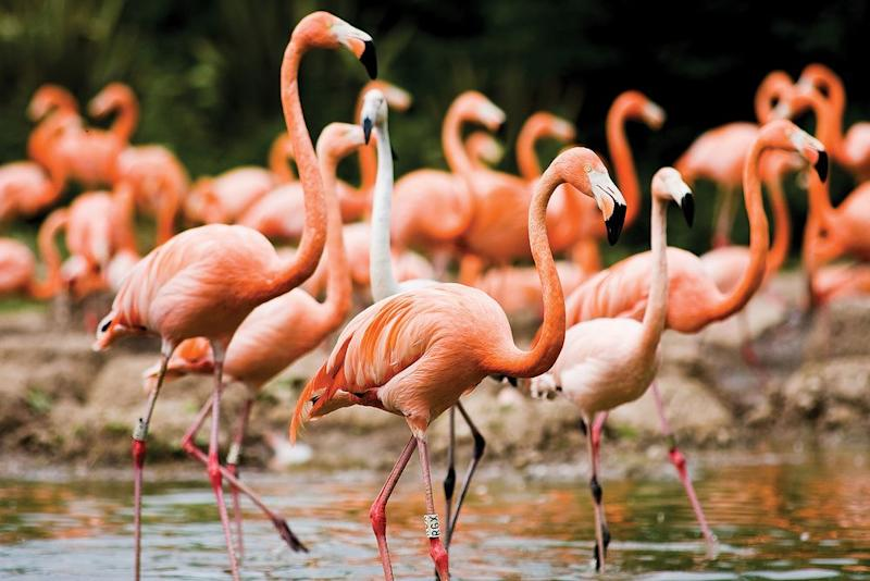 Flamingo Euthanized After Student Throws Rock in Zoo Exhibit