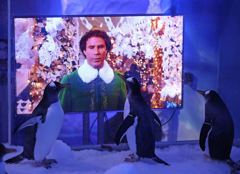 <p>Will Ferrell stars as Buddy the elf in the 2003 classic</p>PA