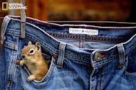 """Around my cabin are a lot of ground squirrels and chipmunks. I always have pecans or peanuts in my pocket to feed them. One afternoon, I found them exploring my pockets in a pair of jeans drying on the clothesline! (Photo and caption Courtesy Betsy Seeton / National Geographic Your Shot) <br> <br> <a href=""""http://ngm.nationalgeographic.com/your-shot/weekly-wrapper"""" rel=""""nofollow noopener"""" target=""""_blank"""" data-ylk=""""slk:Click here"""" class=""""link rapid-noclick-resp"""">Click here</a> for more photos from National Geographic Your Shot."""
