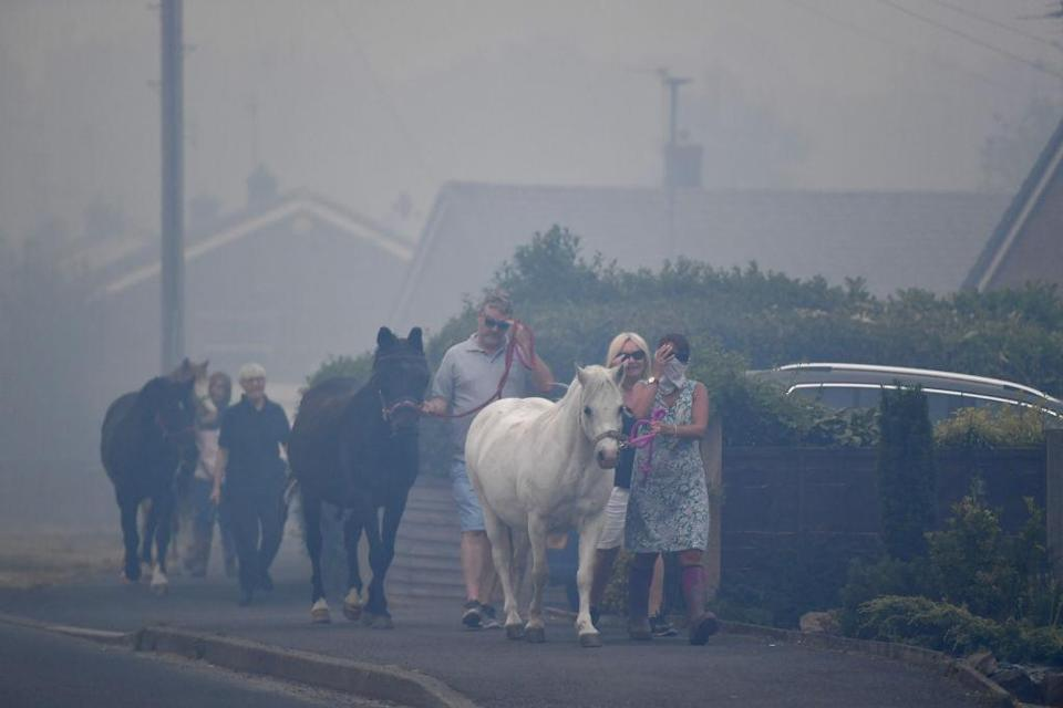 Horses are moved through heavy smoke in Carrbrook where residents were evacuated (Picture: Getty)