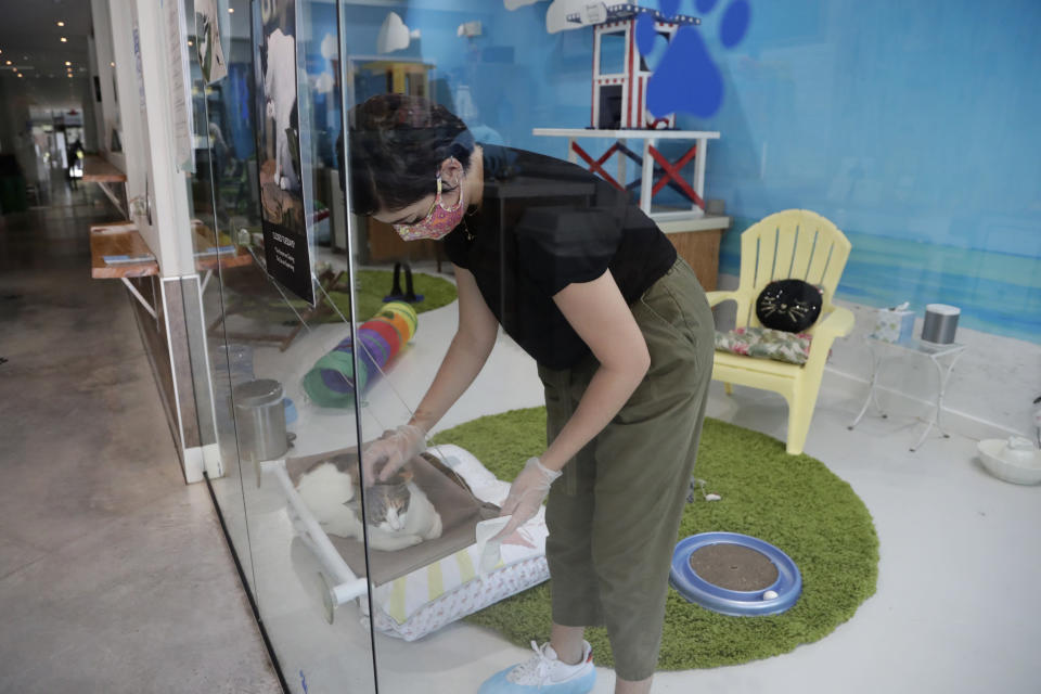 Aziah Sajerstein, who works as a volunteer at the Cat Cafe South Beach, wears a protective face mask and gloves as she sanitizes touch points during the coronavirus pandemic, Wednesday, July 29, 2020, in Miami Beach, Fla. The cafe offers a place for cat lovers to spend time with cats, which are also available for adoption. The business, independently owned by Celyta Jackson, will be closing at the end of the week as the tourism sector in Miami-Dade County is suffering due to the pandemic. (AP Photo/Lynne Sladky)