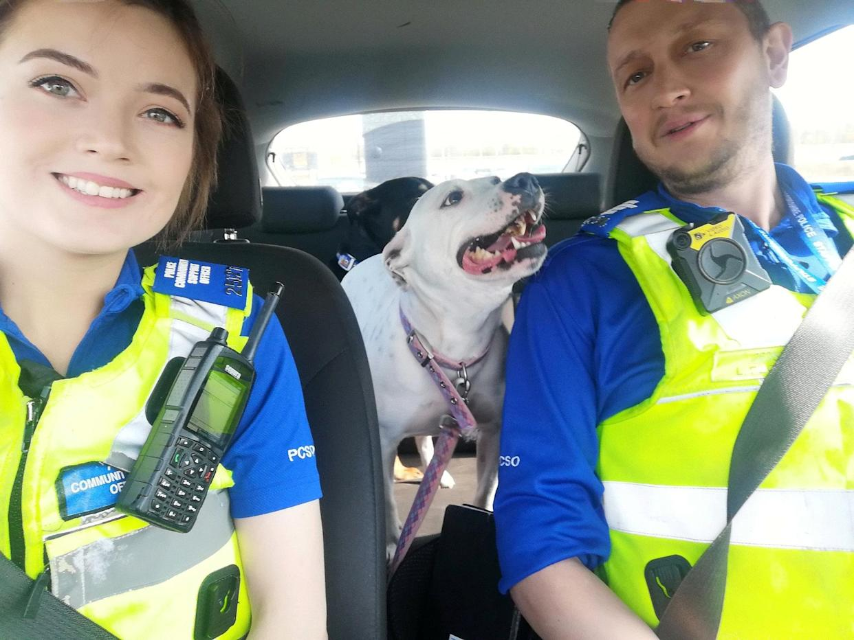 Police shared a picture of the dogs happily in the bag of a police vehicle after being rescued. (SWNS)