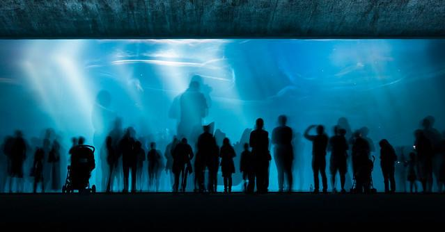 H2Glow (Deep Water Long Exposure), Monterey Bay Aquarium