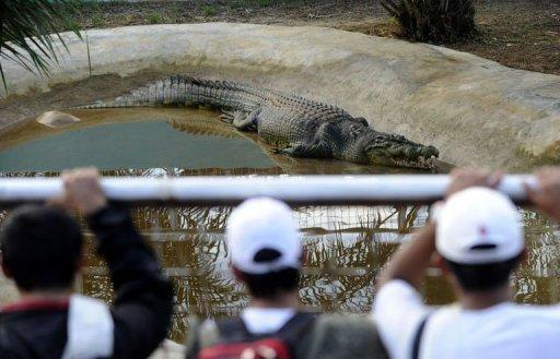Residents from nearby towns watch Lolong in a caged pen in the southern Philippine town of Bulawan. The captured Lolong now spends his days in a pen, where he has become an instant celebrity among locals but a cause celebre for some animal rights groups who have demanded he be released back into the wild