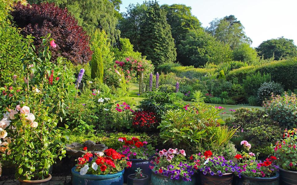 Gardening in July what to plant and tidy in your garden this month things to do 2021 - Getty Images