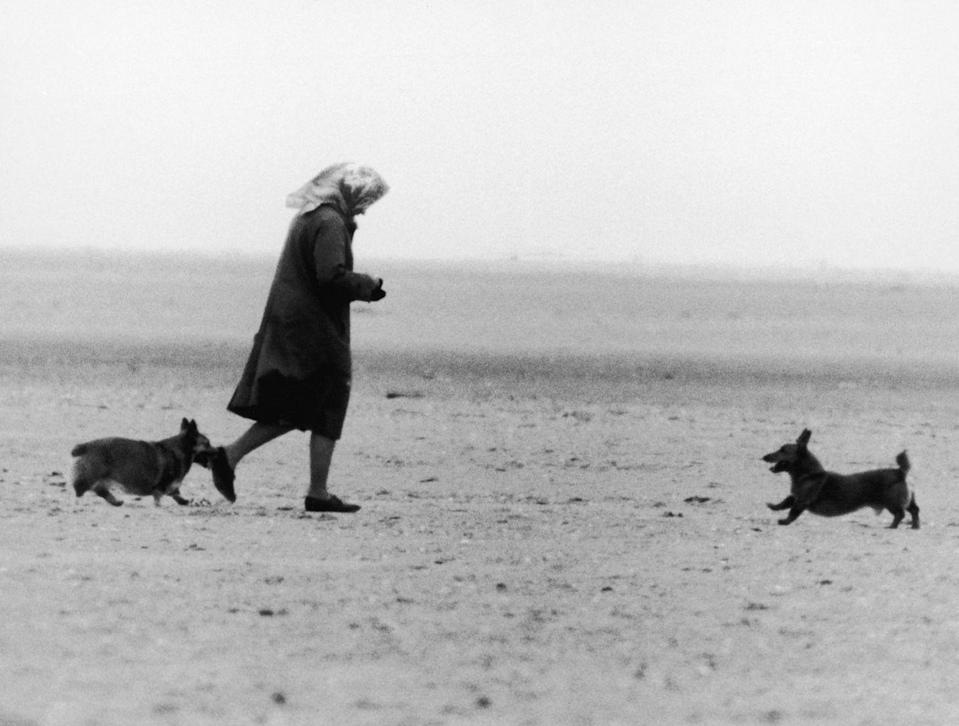 <p>Even while playing with her corgis at a beach near Sandringham, the Queen remains put-together as ever in a light-weight coat and head scarf.<br></p>