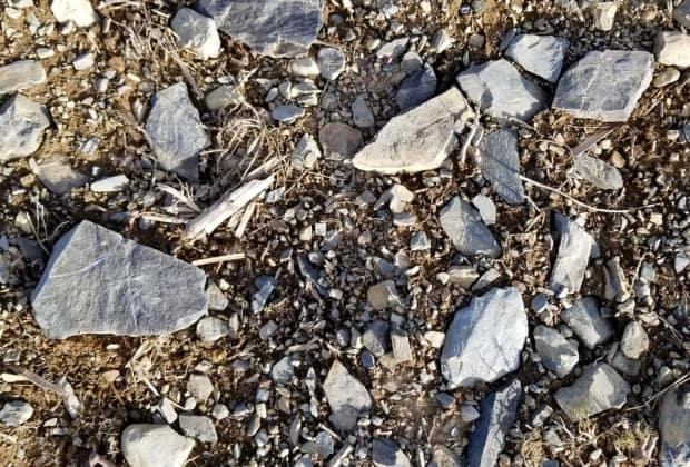 Northern soils tend to be rocky, a problem come harvest time.