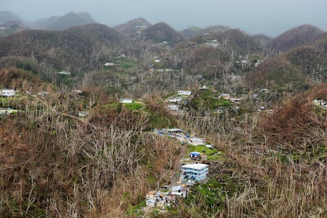 <p>Homes damaged by Hurricane Maria stand amid thousands of trees that have been exfoliated by Hurricane Maria in Puerto Rico, Oct. 5, 2017. (Photo: Lucas Jackson/Reuters) </p>
