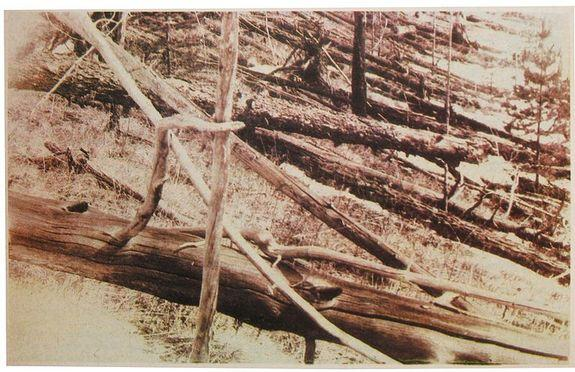 Flattened trees from the Tunguska event photographed by the Leonid Kulik expedition in 1927.