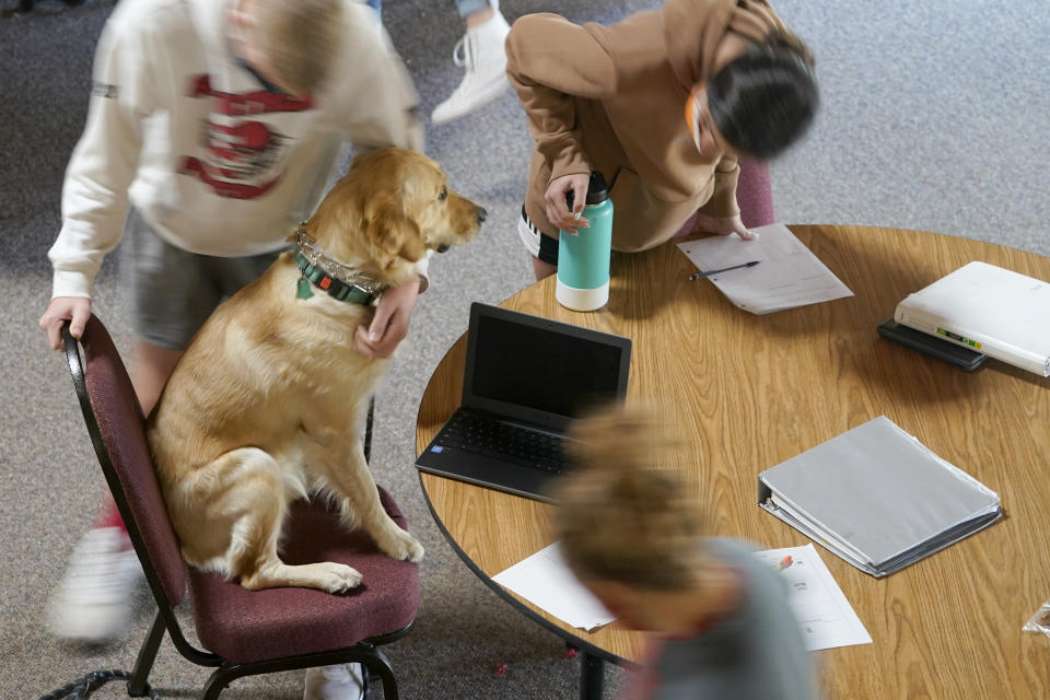 Neah, a companion dog at Hesston Middle School, takes a seat in a makeshift classroom in the Cross Winds Convention Center in Hesston, Kan., Friday, Nov. 6, 2020. (AP Photo/Orlin Wagner)
