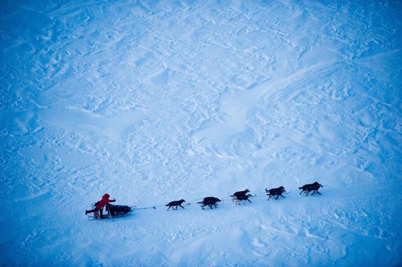 Iditarod front-runner Dallas Seavey makes his final drive toward Nome, Alaska, during the Iditarod Trail Sled Dog Race on Tuesday, March 13, 2012. (AP Photo/Anchorage Daily News, Marc Lester)