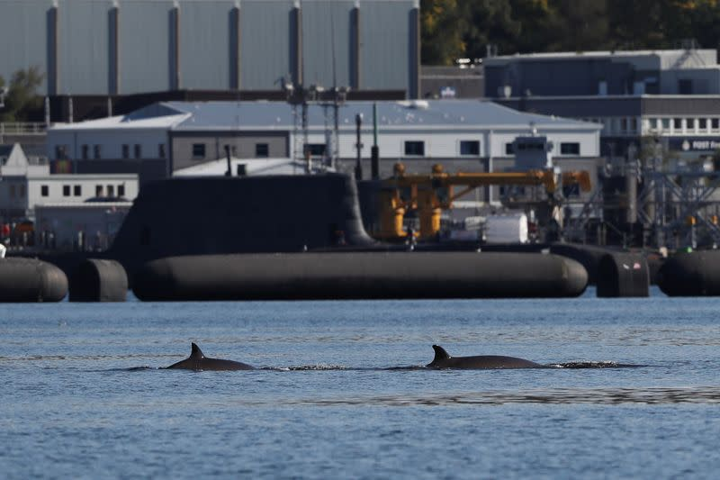 Whales are seen near the Faslane nuclear submarine base in Gare Loch