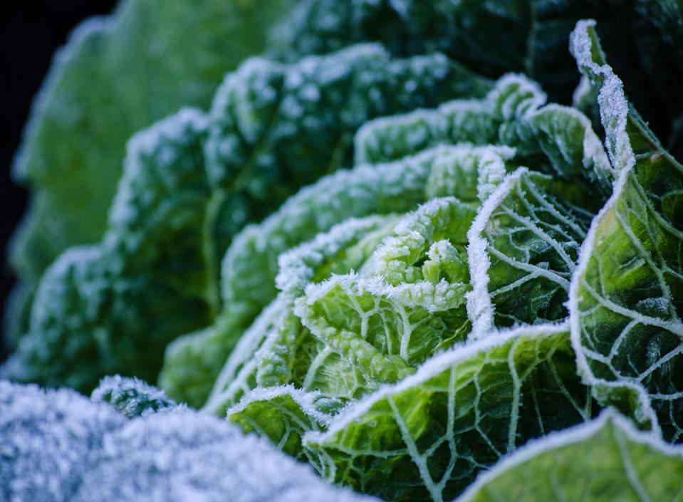 Winter garden ideas: cabbage