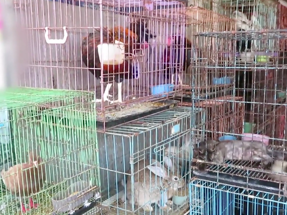 Animals from different species - birds, rabbits, cats and reptiles - are crammed in small cages in close proximity to be sold for either consumption or collection in Bali's Satria Market: PETA Asia