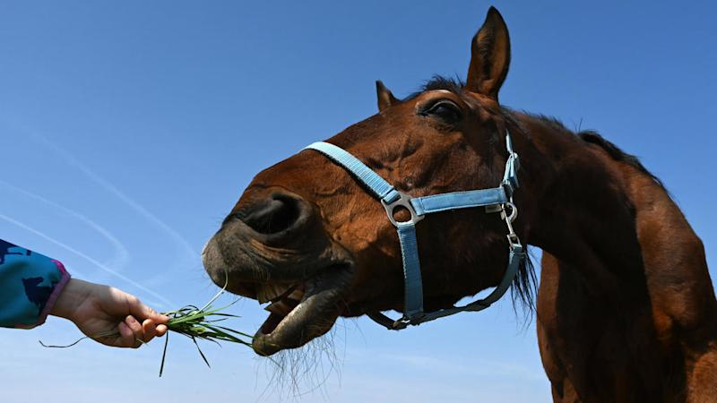 French police call on public to help rein in mounting horse mutilations