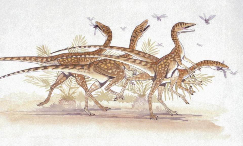 A herd of Saltopuses chasing insects. The new study identifies the Saltopus as the closest thing in the fossil record to what the hypothetical common ancestor might look like