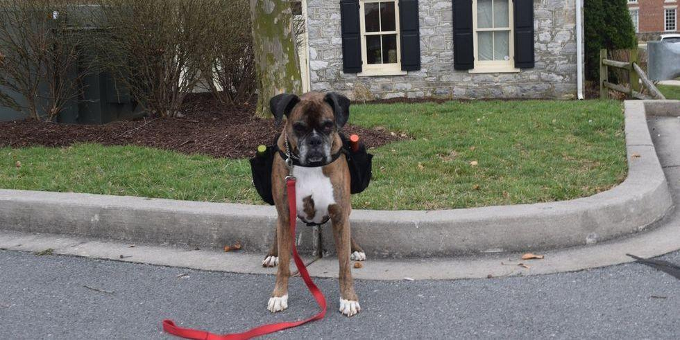 A Dog Will Deliver Wine To Your Car At This Maryland Shop And It's The Cutest Thing I've Ever Seen