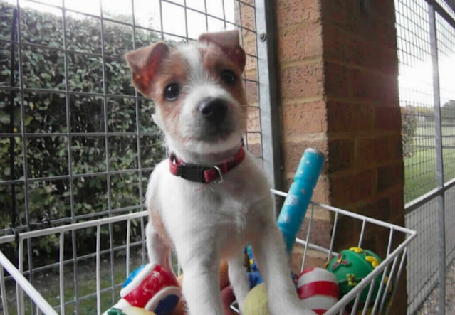 <em>Cheeky Olly started off life as an abandoned puppy (Blue Cross)</em>