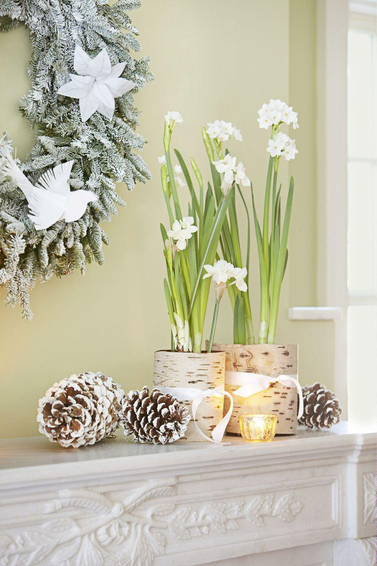 <p>These winter blooms really make a statement once they're potted in birch bark-covered planters. Scatter some pinecones and votive candles nearby to fill any empty space. </p>