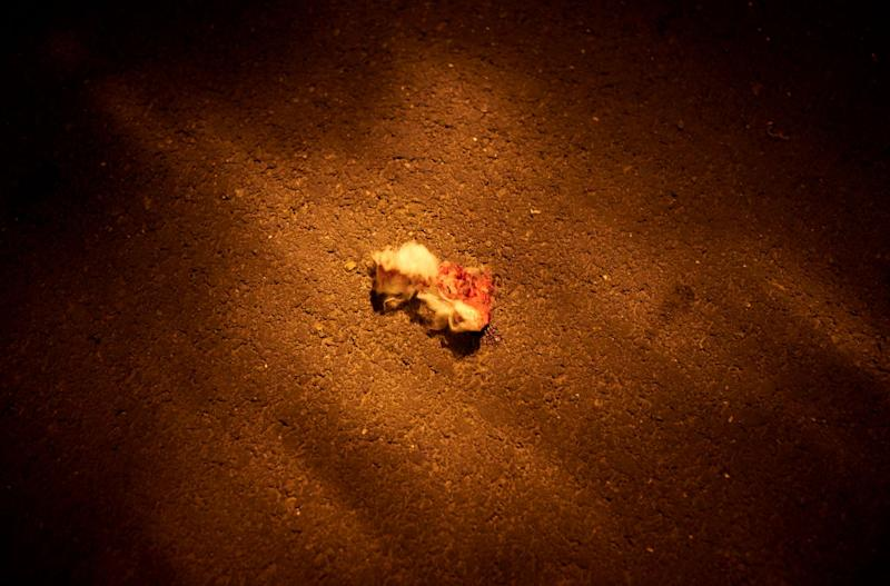Bloodied cotton wool at the scene where police shot a man after he decapitated a middle school teacher. Source: Getty
