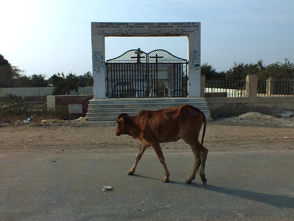 Cows are walking through the road alongside of the famous John Jacob Christian cemetery of Jacobabad. The graveyard has a meaningful association to the city since it is named after the Brig. John Jacob who was buried here in 1858.  Jacobabad is a city in Sindh, Pakistan, serving as both the capital city of Jacobabad District and the administrative centre of Jacobabad Taluka, an administrative subdivision of the district. The town was founded near the village of Khangarh in 1847 by Brigadier General John Jacob.