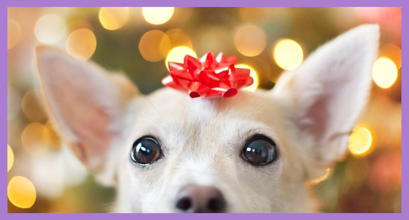 To help you make pet gift-giving a successful and memorable experience this Christmas, we have put together some advice with help from experts in the pet industry. (Photo: Getty Images)