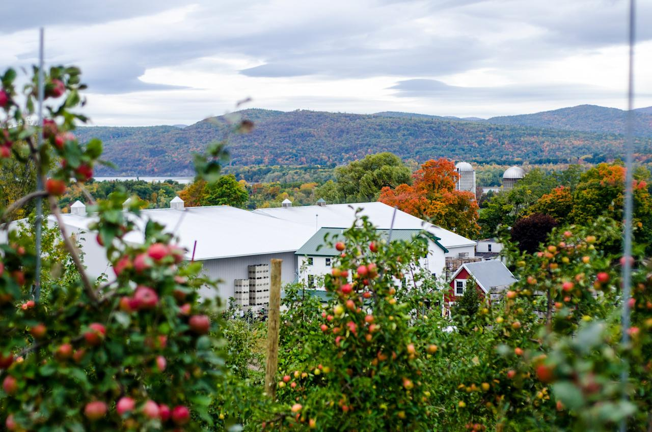 "Suckers for quintessential fall outings (and photo ops) won't want to miss the historic orchards scattered across the state. A few standouts: <a href=""https://www.shelburneorchards.com"">Shelburne Orchards</a>, which also has a tasting room where apple pickers can taste apple brandy made onsite; <a href=""https://www.champlainorchards.com/"">Champlain Orchards</a> (pictured), one of the oldest continuously operating orchards in Vermont; and <a href=""https://www.burttsappleorchard.com/index.html"">Burtt's Apple Orchard</a> in Cabot, a small plot that's only a short drive from the Cabot Creamery (just in case you want to pair your fruit with cheese)."