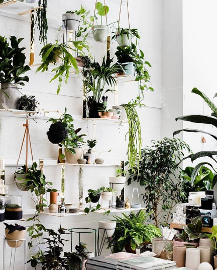 photo of lots of indoor plants