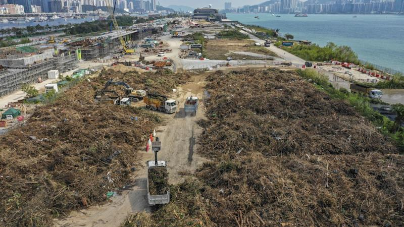 Most of the trees felled in Hong Kong by Typhoon Mangkhut to go straight to landfill