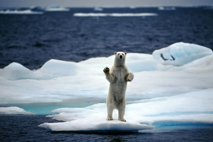 """<img alt=""""""""/><p>In what seems to be becoming an annual occurrence, temperatures at the North Pole are about to reach or possibly exceed the freezing point this week as the North Atlantic and the North Pacific Oceans inject unusually mild air into the Arctic.</p> <p>Not coincidentally, Arctic sea ice is at record low levels, with a freak disappearance of ice off the western coast of Alaska, between Alaska and Russia. This vanishing of sea ice in the Bering Sea is exposing coastal communities in Alaska to storm surge flooding from typically fierce winter storms, particularly Little Diomede Island.</p> <div><p>SEE ALSO: <a rel=""""nofollow"""" href=""""https://mashable.com/2018/02/14/arctic-ship-eduard-toll-navigates-northern-sea-route-without-icebreaker/?utm_campaign=Mash-BD-Synd-Yahoo-Science-Full&utm_cid=Mash-BD-Synd-Yahoo-Science-Full"""">Gas-filled vessel barrels solo through pathetic Arctic sea ice during dead of winter</a></p></div> <p>Videos from the island, which straddles the border with Russia show high waves slamming into the coastline, when normally there would be a sheet of ice protecting the island from high waves during the winter.</p> <div><div><blockquote> <p>This is what record low sea ice in the Arctic means on the ground: stunning FB video taken Tuesday Feb 20 from Little Diomede, Alaska, smack in the middle of Bering Strait. Scary stuff, on many levels. <a rel=""""nofollow"""" href=""""https://twitter.com/hashtag/akwx?src=hash&ref_src=twsrc%5Etfw"""">#akwx</a> <a rel=""""nofollow"""" href=""""https://twitter.com/hashtag/Arctic?src=hash&ref_src=twsrc%5Etfw"""">#Arctic</a> <a rel=""""nofollow"""" href=""""https://twitter.com/Climatologist49?ref_src=twsrc%5Etfw"""">@Climatologist49</a> <a rel=""""nofollow"""" href=""""https://twitter.com/ZLabe?ref_src=twsrc%5Etfw"""">@ZLabe</a> <a rel=""""nofollow"""" href=""""https://t.co/e2Hb4Rvgry"""">https://t.co/e2Hb4Rvgry</a></p> <p>— Rick Thoman (@AlaskaWx) <a rel=""""nofollow"""" href=""""https://twitter.com/AlaskaWx/status/966457683430719489?ref_src=twsrc%5Etfw"""">February 21, 2018</a></p>"""
