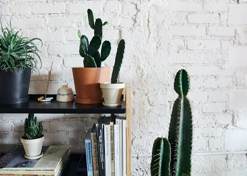 """<a href=""""https://fave.co/2vRbnEA"""" target=""""_blank"""" rel=""""noopener noreferrer"""">Bloomscape</a> is an online shop that delivers plants directly from the greenhouse to your front door. The brand just unveiled a Mojave-inspired cacti collection, including everything from a<a href=""""https://fave.co/2Uiun8q"""" target=""""_blank"""" rel=""""noopener noreferrer"""">Prickly Pear Cactus</a>and a <a href=""""https://fave.co/2JcYSpL"""" target=""""_blank"""" rel=""""noopener noreferrer"""">Hedge Cactus</a>to an extra large <a href=""""https://fave.co/2UgJjUh"""" target=""""_blank"""" rel=""""noopener noreferrer"""">Yucca cane</a>. For cacti beginners, we <a href=""""https://bloomscape.com/product/mojave-collection/"""" target=""""_blank"""" rel=""""noopener noreferrer"""">recommend this mini Mojave collection</a> that includes a Golden Barrel Cactus, a Fairy Castles Cactus and a Bullwinkle Cactus. If you're not into cacti, however, there's plenty of <a href=""""https://fave.co/2vRbnEA"""" target=""""_blank"""" rel=""""noopener noreferrer"""">other greenery to browse at Bloomscape</a>.<br /><br /><a href=""""https://fave.co/2WFZV9z"""" target=""""_blank"""" rel=""""noopener noreferrer"""">Check out plants at Bloomscape</a>."""