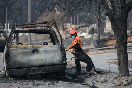 Search and rescue worker Shay Cook inspects a vehicle with dog Zinka in the aftermath of the Tubbs Fire in the Coffey Park neighborhood of Santa Rosa, California U.S., October 17, 2017.  REUTERS/Loren Elliott