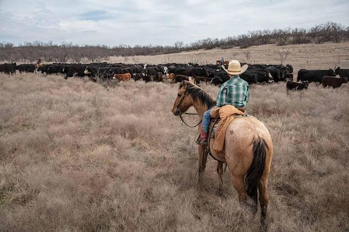 Tecumseh Ranch, located near the Clear Fork of the Brazos River, is up for sale. The ranch is located in southwest Throckmorton County and has been under family ownership for generations.