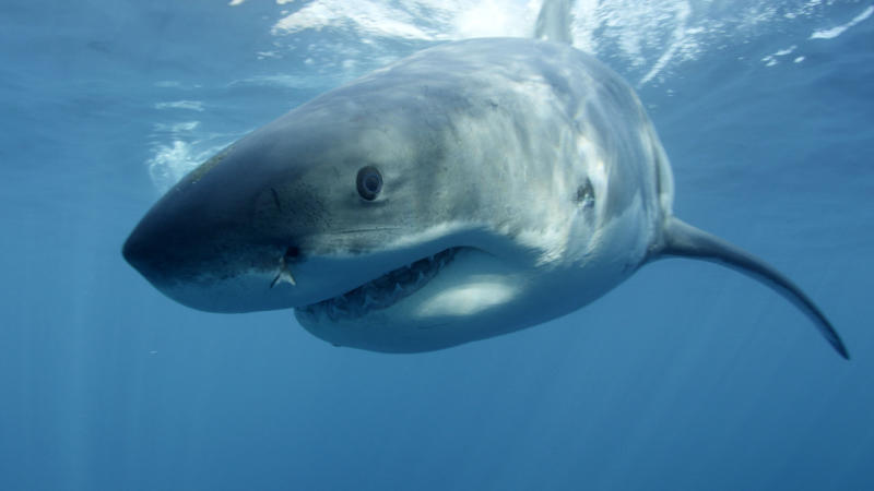 WA to get first shark proof barrier