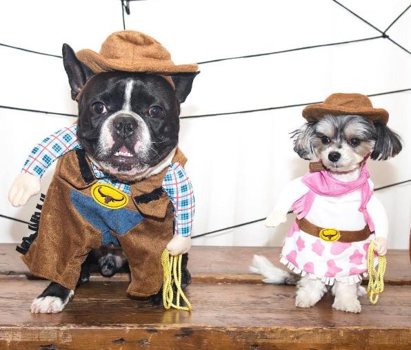 """<p><a href=""""https://www.instagram.com/oscarfrenchienyc/?hl=en"""">Oscar</a> and <a href=""""https://www.instagram.com/tinkerbellethedog/?hl=en"""">Tinkerbelle</a> are corralling up all the puppy treats in the Wild West. <i>(Photo: @<a href=""""https://www.instagram.com/p/BKojkJUgq51/?taken-by=oscarfrenchienyc&hl=en"""">oscarfrenchienyc</a>)</i></p>"""