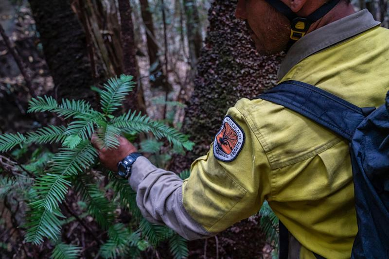 Forecasters expressed hope this week that rain would bring relief to areas hit by the ongoing bushfires. (Photo: New South Wales Government)