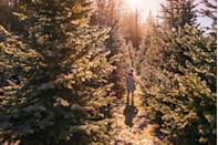 """<p><strong>Blue Springs, Nebraska </strong></p><p>Get into the holiday spirit and pick up your tree, along with handmade wreaths and garlands to display in and around your home. <a href=""""http://www.pinecresttreefarm.com/?fbclid=IwAR2vURws6mf6xLNh-7_CBpHWCQZ_YkAmY5shipHNpMbort30i7tjBBm1_wY"""" rel=""""nofollow noopener"""" target=""""_blank"""" data-ylk=""""slk:Pinecrest Tree Farm"""" class=""""link rapid-noclick-resp""""><strong>Pinecrest Tree Farm</strong></a> also has rooms for kids (and adults) to craft in, and you can guzzle all the hot apple cider you want. <br></p>"""