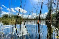 Water vegetation is seen growing up over the water in Everglades National Park, Florida on September 30, 2021 (AFP/CHANDAN KHANNA)